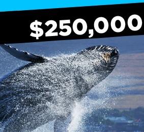 Новый турнир в 888 Poker с призовым фондом $250,000
