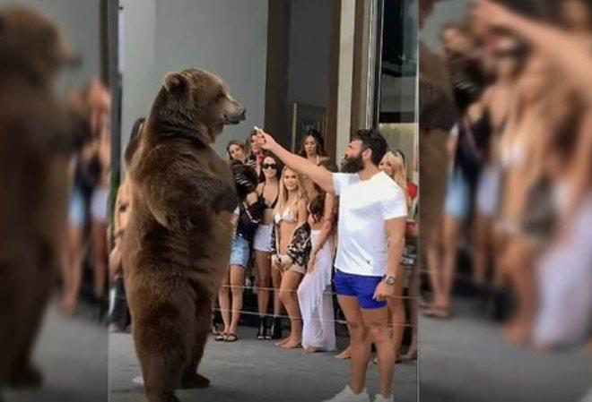 Трюк Дэна Билзериана с кормлением медведя во время апрельской вечеринки вызвал возмущение защитников прав животных